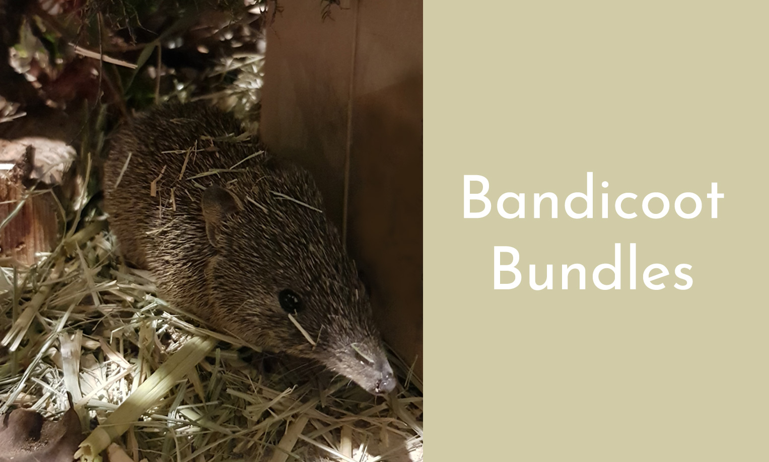 Bandicoot Bundles