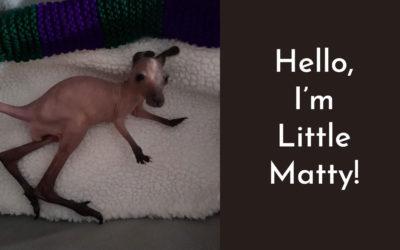 Matty, the Western Grey Kangaroo's Story