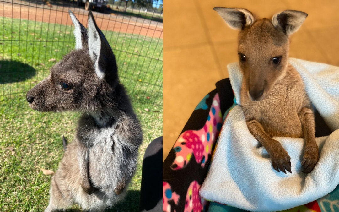 Jerry & Charlie.. Two Joeys That We Love